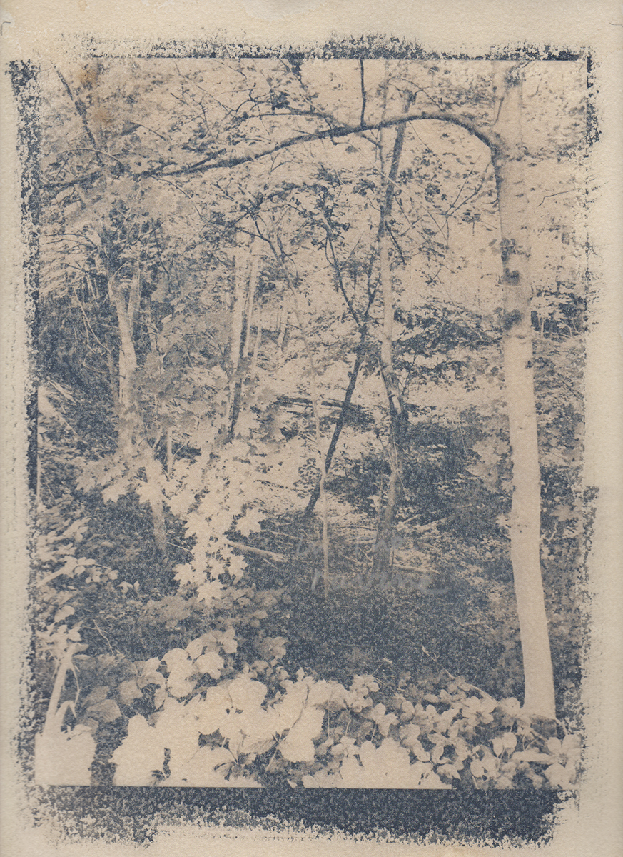 Cyanotype photograph toned with coffee.